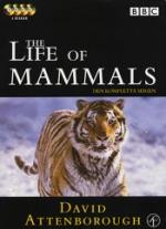 Life of mammals / Hela serien