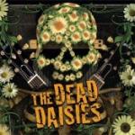 Dead Daisies (Import)