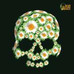 Dead Daisies (Orange)