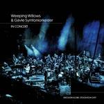 Skivmöbel / Zomo VS-Box 100/1 Valnöt