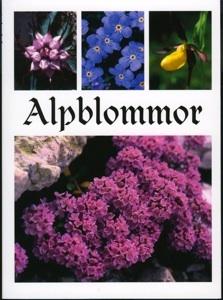 Alpblommor