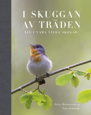 I Skuggan Av Träden - Liv I Våra Vilda Skogar
