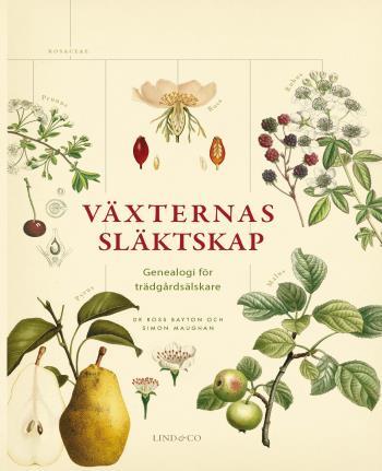 Växternas Släktskap - Genealogi För Trädgårdsälskare