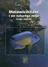 Malawiciklider I Sin Naturliga Miljö