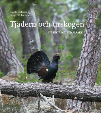 Tjädern Och Urskogen - I Tyresta Nationalpark