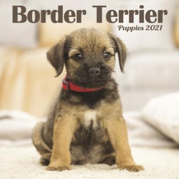 Border Terrier Puppies Mini Square Wall Calendar 2021
